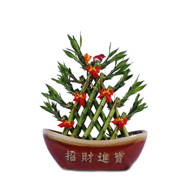Lucky Bamboo Bonsai In Ceramic of Congratulations (bonmua FDJ-A143)